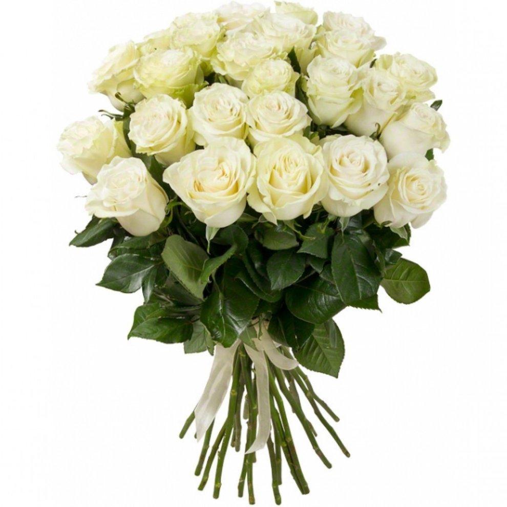 Букет из белых роз картинка, день первокурсника